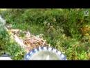 ОРИЕНТИРОВАНИЕ В ЛЕСУ.Ориентирование по кроне дерева. Как найти север