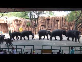 Тайланд, г. Паттайя, в зоопарке на шоу слонов. Часть №1