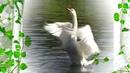 Доброте, любви и верности, учат лебеди людей.