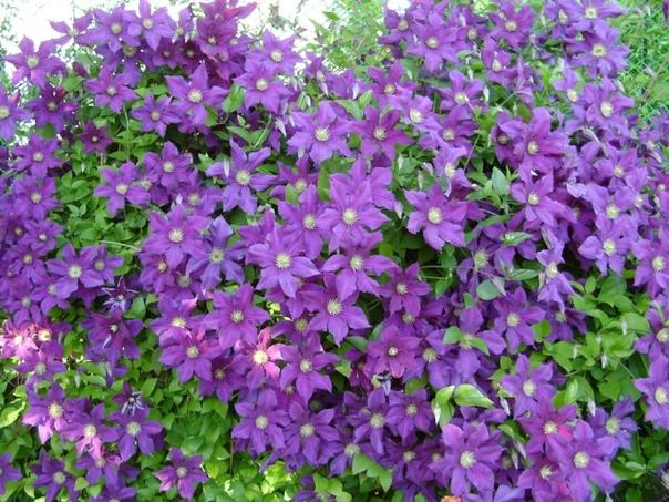 Что посадить в августе и в начале осени