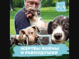 Искалеченную на Донбассе собаку выхаживают в приюте под Москвой