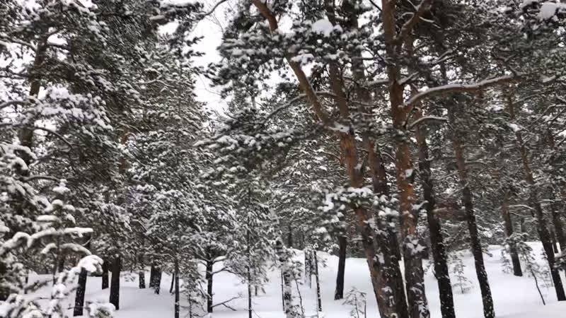 Природа на трассе 12.02.19
