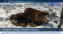 Новости на Россия 24 • Конец дружбе? Тигр Амур проучил чересчур навязчивого козла Тимура