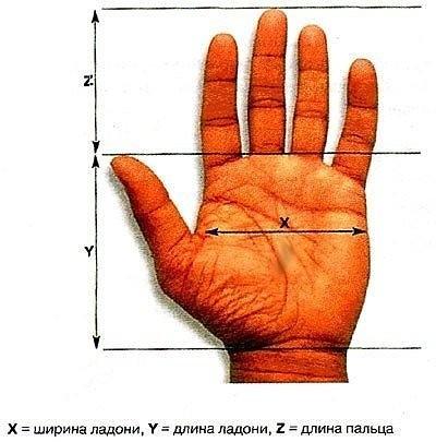 Знаете ли вы, что если собрать вместе кончики своих пальцев, чтобы ладонь приобрела форму клюва, то точка входа энергии будет находиться прямо в ямке в центре ладони.