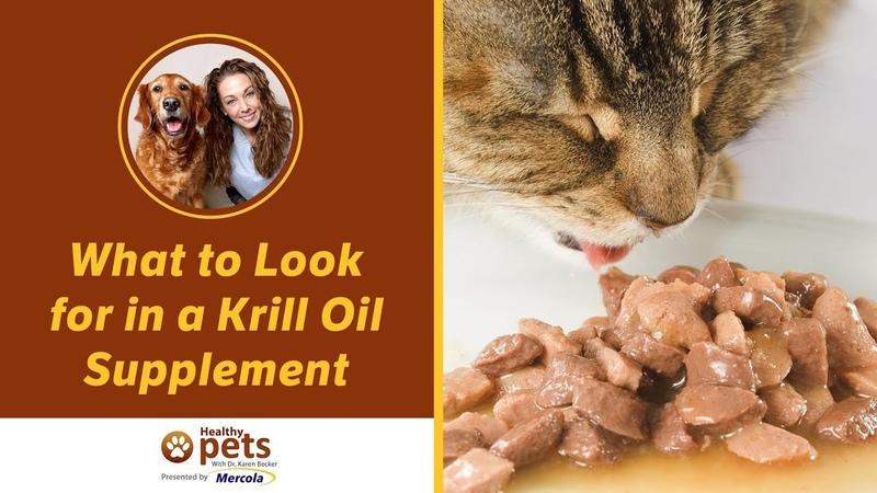 Что полезного в масле криля What to Look for in a Krill Oil Supplement
