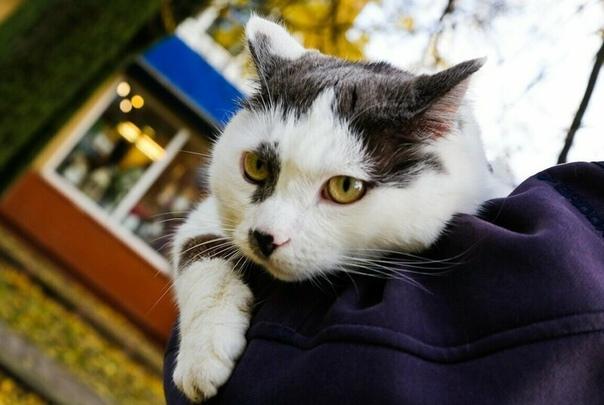 История жизни самого умного кота в России