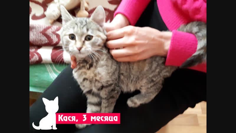 Кася, 3 месяца