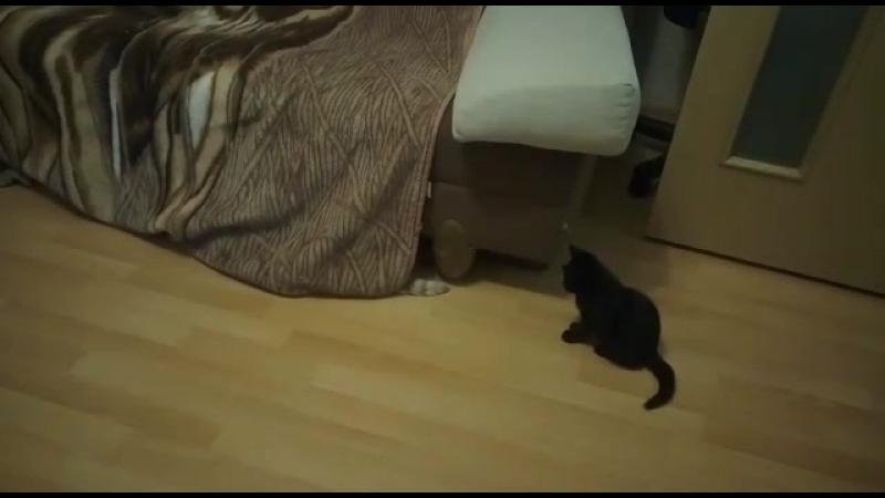 Санс Марсель vs Пурсефона Блэк