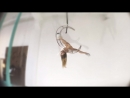 Tatyana Kurochkina Exotic Aerial
