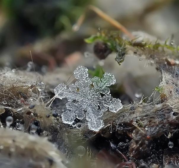 Снежинки. Фотограф Андрей Осокин (Москва)