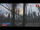 Трое жителей Брестского района подозреваются в незаконной охоте на зубра