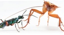 Karate kicks keep cockroaches from becoming zombies wasp chow