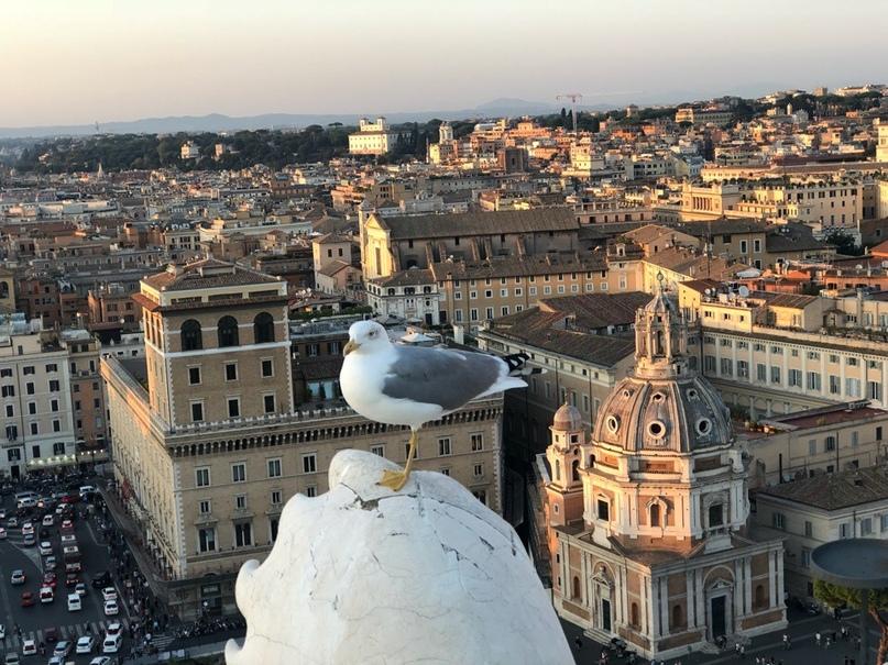 Mari Pigeon | Санкт-Петербург