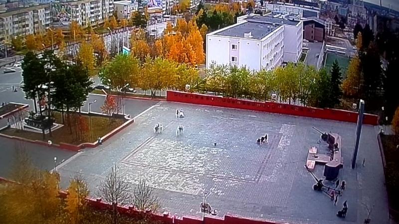 Ноябрьск