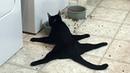 Я РЖАЛ ПОЛ ЧАСА. Смешные Коты и Собаки. ПРИКОЛЫ С ЖИВОТНЫМИ. Cute Cats 118