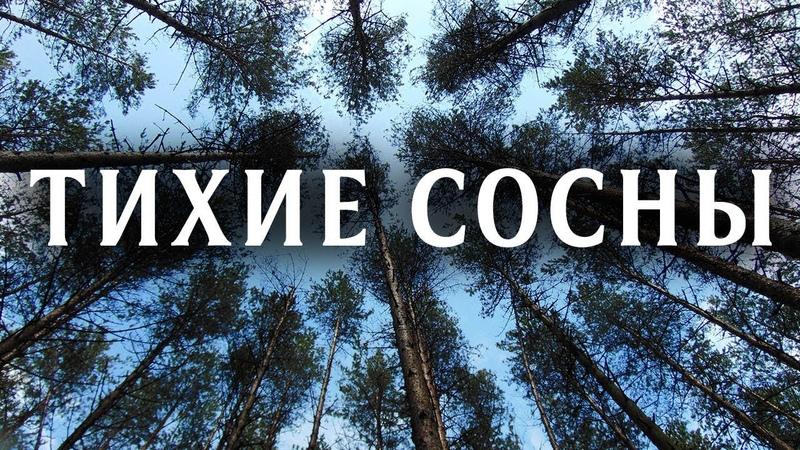 Тихие сосны Фильм 2009 Детективная мелодрама @ Русские сериалы