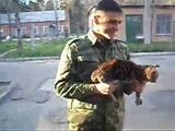 Армейский КОТ АК 47