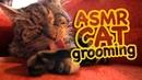 ASMR Cat Grooming 39