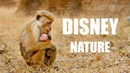 The Films of Disney Nature - A Supercut of Our Planet