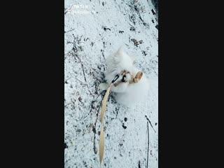Snowball's ❤