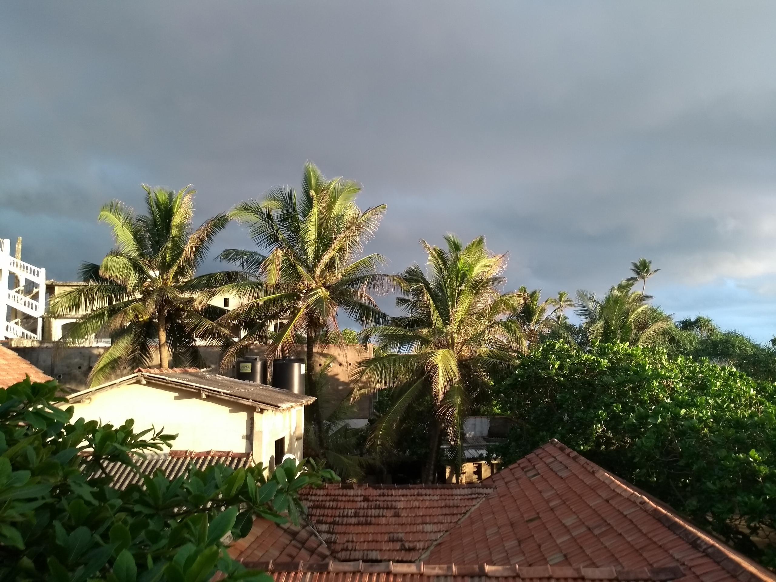 Шри Ланка (фото) - Страница 11 HhLUZ5nqquY