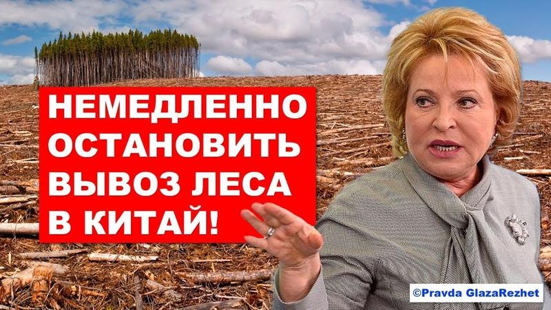 Вывоз леса в Китай будет запрещён не опять а снова Pravda GlazaRezhet