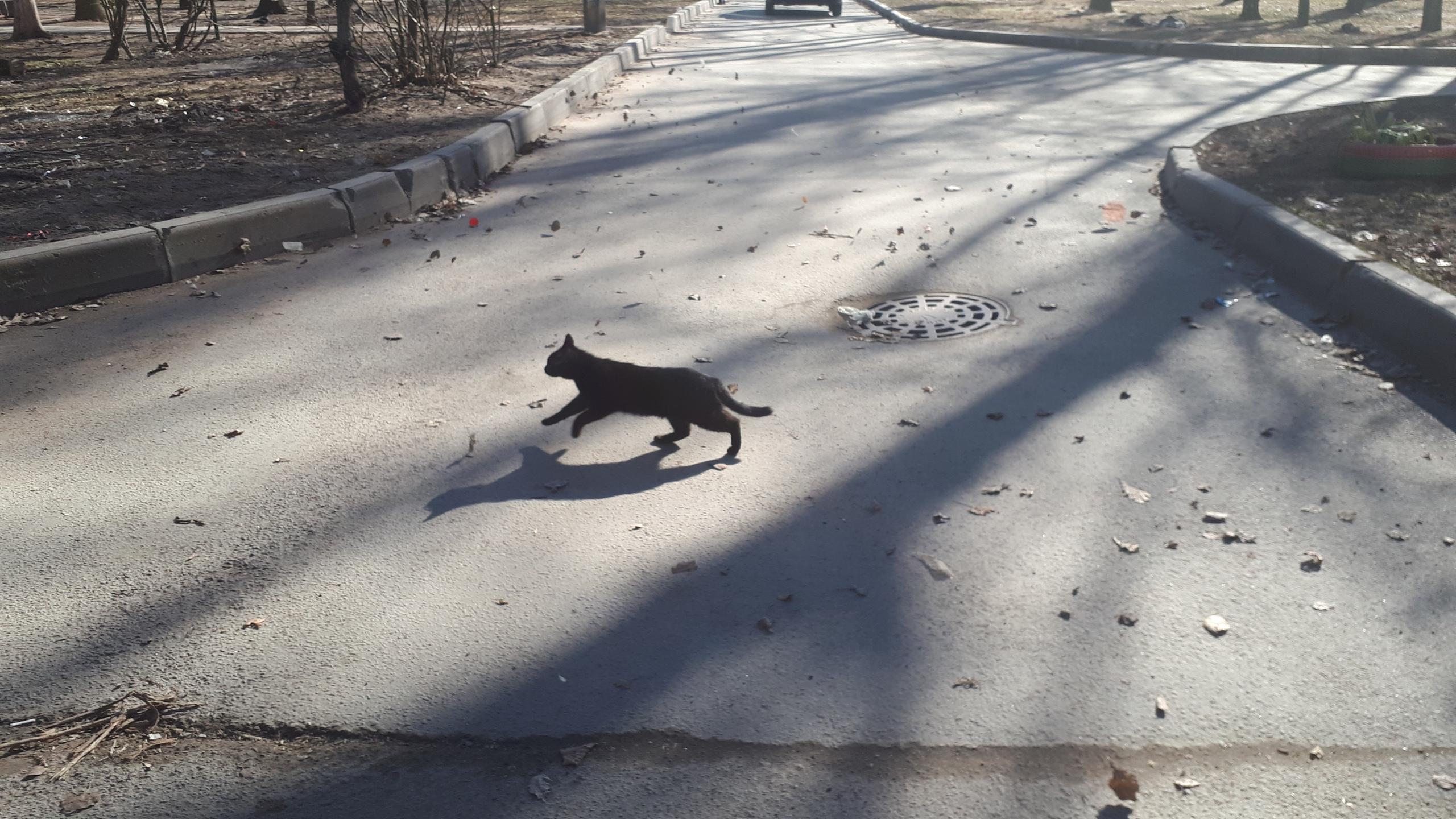 Черная кошка перебежала дорогу картинка