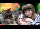 Смешные коты 2019 Самое МИЛОЕ Видео про Котят РЕСПУБЛИКА КОШЕК