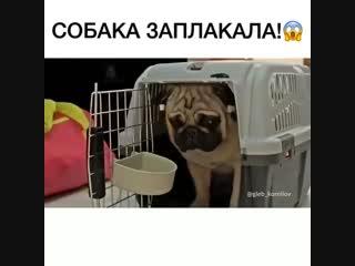 Не обижайте животных. Они тоже умеют плакать и ждать😣