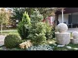Хвойные растения. Что где посадить Можжевельник Блю Стар, Холгер, Мейери, Блю Карпет, Флореант.