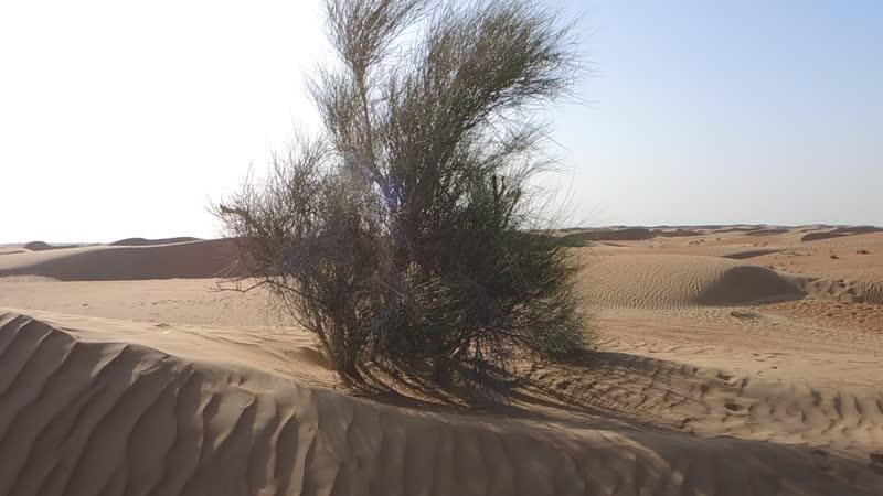 Вот она настоящая пустыня С барханами колючками и разными разными туристами