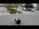 Skeleton rides a segway down the street