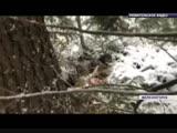 Недалеко от Железногорска застрелили медведя, который пугал дачников
