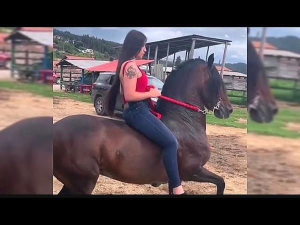 Paso Fino Compilation 🐎 Perfect Ride Horse 🙏