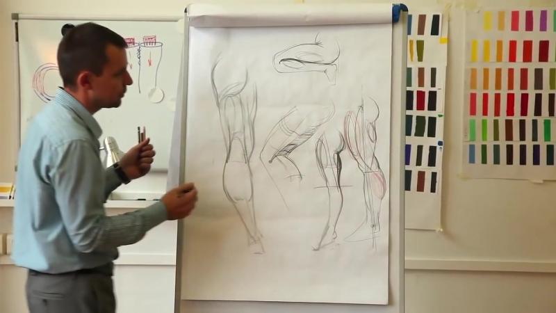 Анатомия. Нижние конечности
