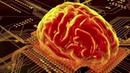 Warnke - Quantenphysik Bewußtsein und Unterbewußtsein