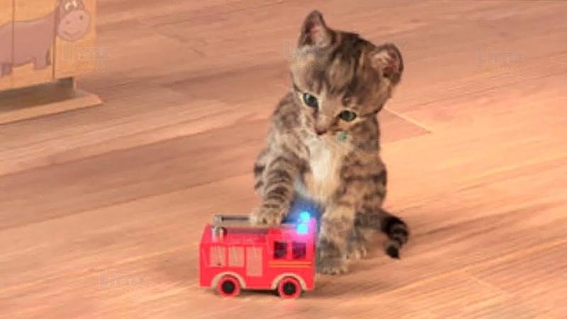 Little Kitten My Favorite Cat Play Fun Pet Care Game for Children