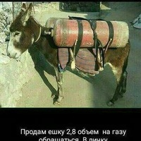 Анкета Павел Эскобар