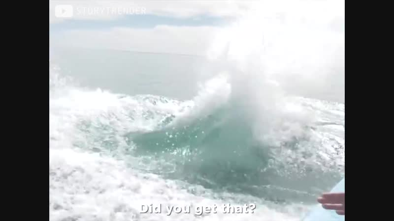 Лодка с туристами встретила дружелюбного кита