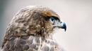 Соколиный Двор / Хищные птицы