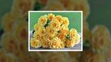 Ольга Вревская - Желтые розы! ProShow Slideshow