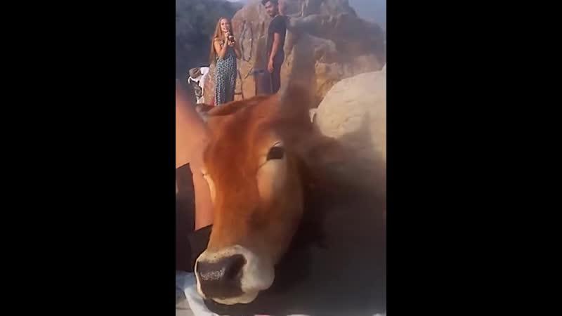 Дружелюбная коровка