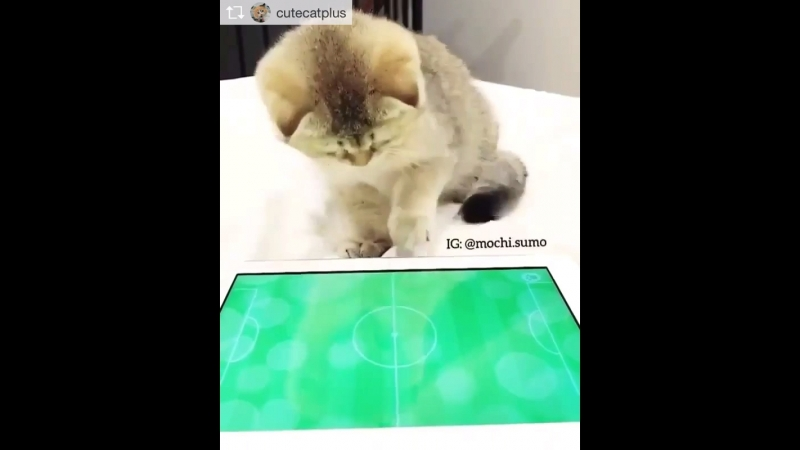 Настоящий фанат футбола