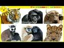 Мир Животных для детей! Учим животных. Название и голоса животных