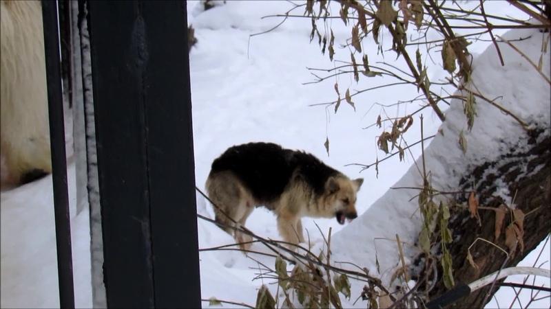 Белый медведь Ростик и его друг собака Общий ужин 21 11 18 г