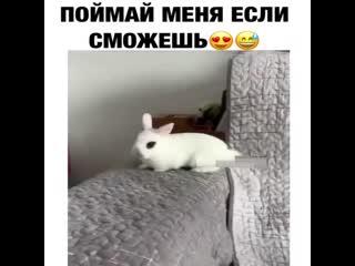 да чем вы кормите этого кролика