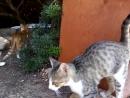 Cologne San Jorgi - La familia de los gatos