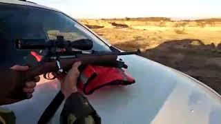 Внимание, новое ЧП с патроном от НПЗ. Ждите итогового заявления ООО Молот-Оружие