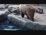 Трогательный ролик. Животные помогают друг другу