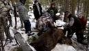 Вести В Интернете собирают голоса за отставку иркутского губернатора, убившего медведя